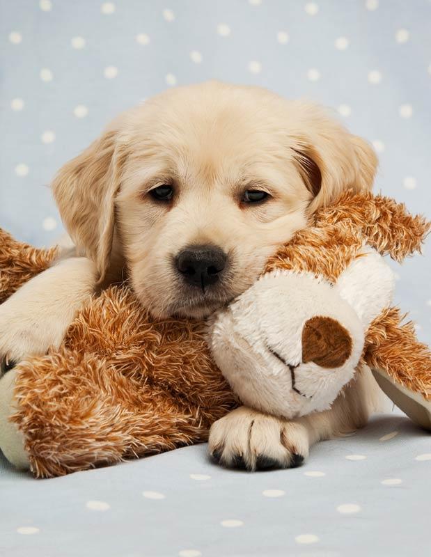 σκυλάκι με λούτρινο
